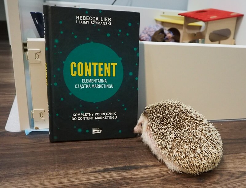 content elementarna czastka marketingu recenzja