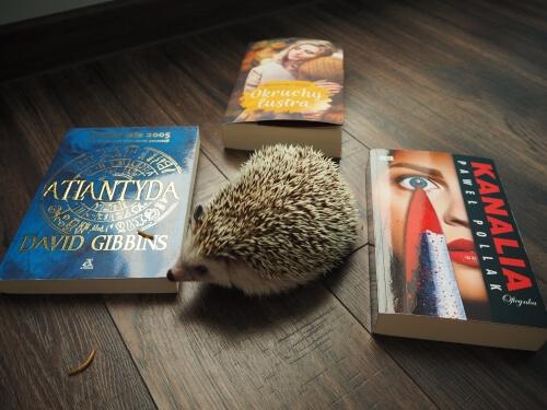 bookparadise nagrody książkowe